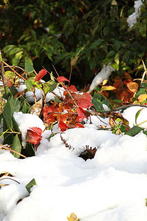 snow2995.jpg