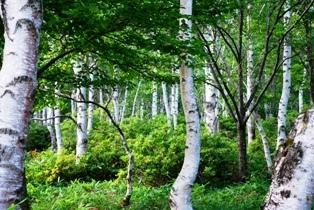 2010s-woods.jpeg