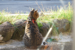 D-cat286.jpg