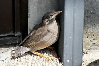 bird4558.jpg