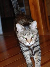 cat0049n.jpg