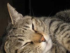 cat0382.jpg