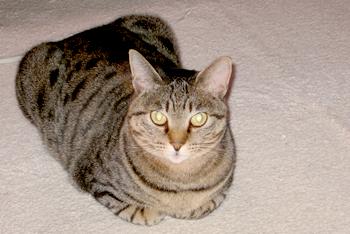 cat041.jpg
