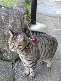cat0578.jpg