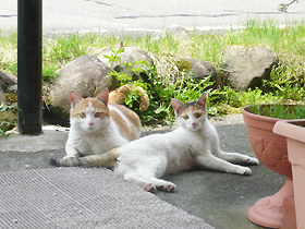 cat1000265.jpg