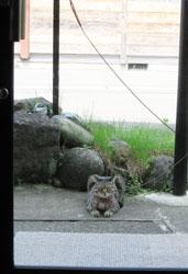 cat1128.jpg
