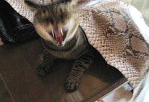 cat1310.jpg