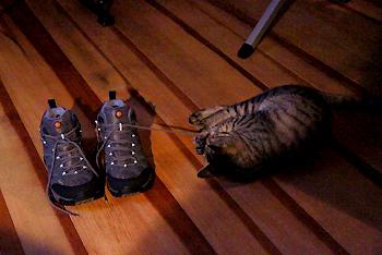 cat1767.jpg