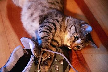 cat1772.jpg