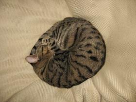 cat1877.jpg
