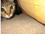 cat2259.jpg