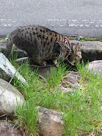 cat2704.jpg