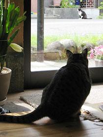 cat2917.jpg