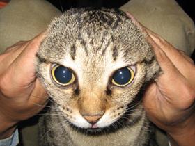 cat3395.jpg