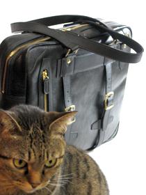cat3977.jpg