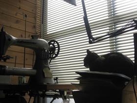 cat4492.jpg