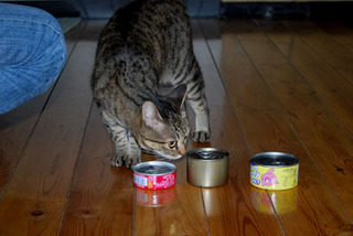 cat4875.jpg