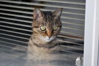 cat5554.jpg