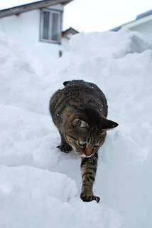 cat5943.jpg