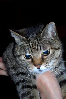 cat7680.jpg