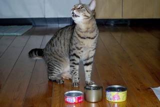 cat_4877.jpg