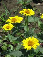 flower1280.jpg