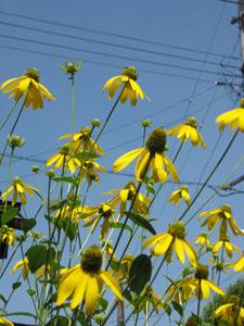 flower1281.jpg