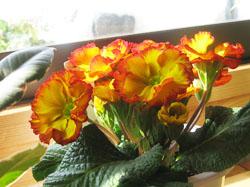 flower2330.jpg