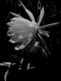 flower2879_1.jpg