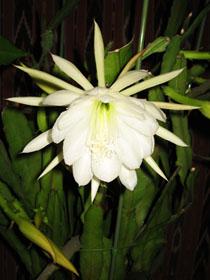 flower2882.jpg