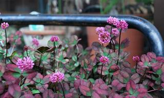 flower8558.jpg