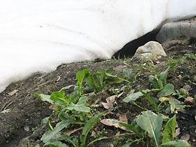 garden2430.jpg