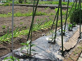 garden2865.jpg