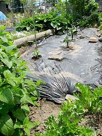 garden2868.jpg