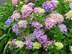 garden3099.jpg