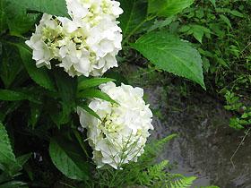 garden3102.jpg