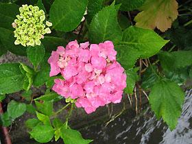 garden3104.jpg