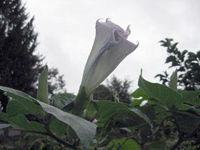 garden3438.jpg