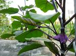 garden577.jpg