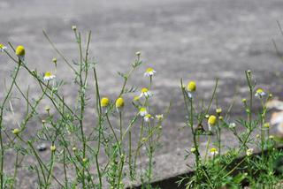 garden6624.jpg