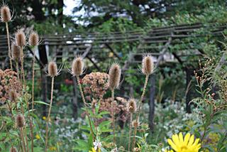 garden7018.jpg