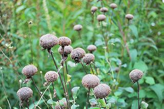 garden7036.jpg