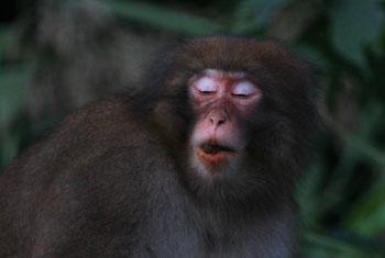 monkey2693.jpg