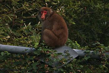 monkey2697.jpg