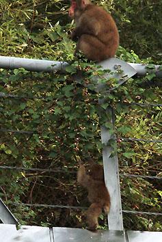 monkey2698.jpg