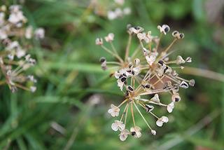 seed5305.jpg