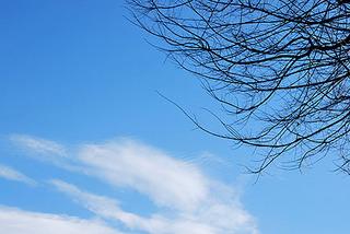 sky7294.jpg