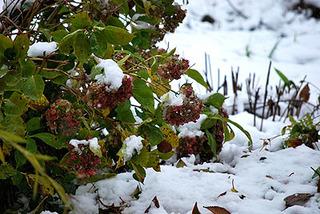 snow7276.jpg